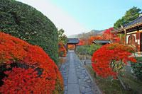 弘源寺 秋の特別拝観