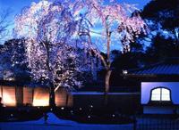 高台寺 春の特別展/夜間特別拝観