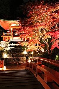 醍醐寺 秋期夜間拝観【事前申込制】