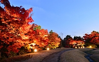 梅小路公園 紅葉まつり
