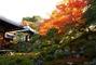 秋の特別公開 霊鑑寺(れいかんじ)