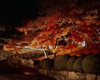知恩院ライトアップ2016(夜間特別拝観)