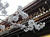 京都・オススメの桜の名所ランキング