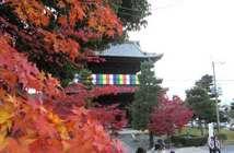 みんなが大好きな京都の「季節」ランキング