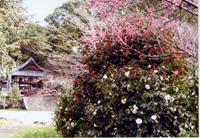平岡八幡宮 花の天井 春の特別拝観
