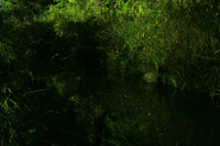 下鴨神社 蛍火の茶会