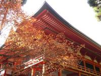 比叡山紅葉まつり 紅楓会(こうふうえ)