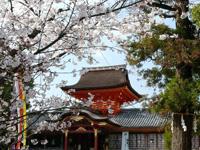 石清水八幡宮 男山桜まつり