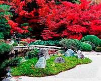 秋の特別公開 金戒光明寺(こんかいこうみょうじ)