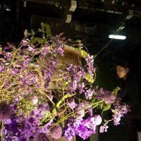 【六角堂】桜速報!ビジネスの中心部から春の訪れを告げるスポット!