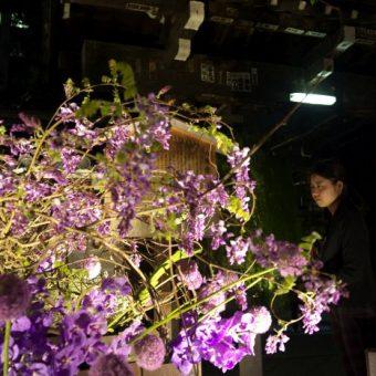 六角堂夜の特別拝観&春のいけばな展