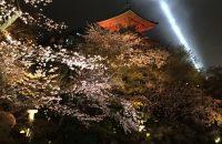 【京都桜情報2017】清水寺の夜桜 ≪4月9日≫