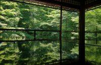 【瑠璃光院・青もみじ】これぞ京都!輝く緑の中の静寂。非日常で気分もリフレッシュ!