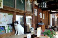 【梅宮大社】猫を可愛く撮りたい!庭園のベストアングルは?
