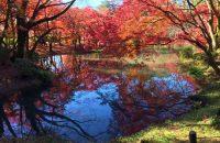 【京都府立植物園】 子連れで秋の情緒を満喫したいなら、遊具があり多彩な紅葉にも出会える京都府立植物園!