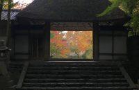 【京都紅葉情報2017】法然院~安楽寺 ≪11月19日≫