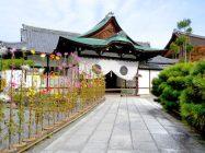 まいまい京都 【大覚寺】研究者と巡る王朝文化、紅葉と嵯峨菊が織り成す大覚寺へ