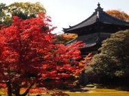 まいまい京都 【嵯峨】嵯峨が紅葉に染まる時、ゆるり名刹・穴場めぐり