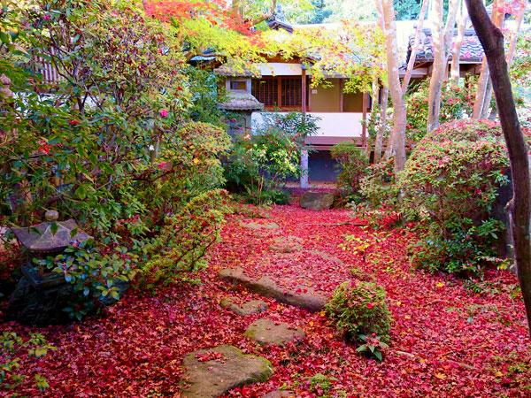 まいまい京都 【八幡】紅葉の隠れ古寺と神仏習合の古仏たち、ゆるり八幡さんぽ
