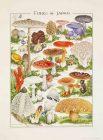 美術館「えき」KYOTO 小林路子 菌類画の世界 きのこに会いにいきましょう!