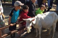 【京都市動物園】 新しくなった京都市動物園はもう行きましたか? この春は、お花見も楽しめる動物園へ!
