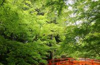 【北野天満宮・史跡御土居の青もみじ】新緑の中で深呼吸!最上のリラックス!