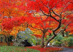 紅葉が美しい天龍寺塔頭 宝厳院で早朝の静寂なひとときを過ごす