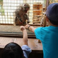 【嵐山モンキーパークいわたやま】  子連れで京都観光するならここ。秋の嵐山を山の上から一望!じゃれ合うお猿さんも可愛い!