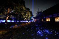 青蓮院門跡 ライトアップ