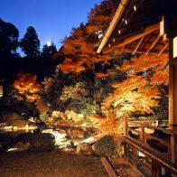 青蓮院門跡夜の特別拝観(ライトアップ)