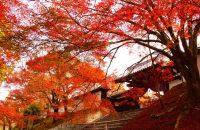 【無料で楽しむ京都の紅葉】曼殊院門跡前の曼殊院弁天堂・天満宮 2018年11月23日