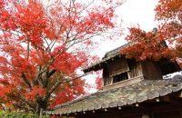 【無料で楽しむ京都の紅葉】禅華院門前のモミジ 2018年11月23日