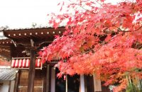 【無料で楽しむ京都の紅葉】紅葉真っ盛りの赤山禅院 2018年11月23日