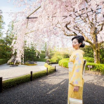 妙心寺退蔵院 春のお食事付き特別拝観