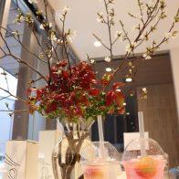 梅体験専門店「蝶矢」【京都のお花見と楽しむ春限定カクテル!】テイクアウトでお花見に、京の街歩きに!