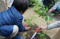 世界遺産の森を守っていきたい!下鴨神社・糺の森市民植樹祭に行ってきた!