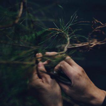 京都マナビアイ 【紫竹/季節の楽しみ方】 みたての季節のお話とともに山の木々に親しむ