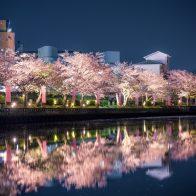 南郷公園の桜 ライトアップ