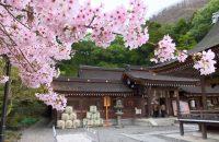 山や田畑とのコントラストが最高! 京都市内に負けない、亀岡のオススメ桜スポット6選