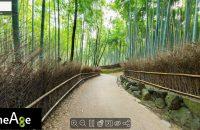 【野宮神社~竹林の小径】嵯峨嵐山エリアの名所を360度ビューで楽しもう!