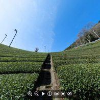 【和束町】宇治茶の郷、和束の「茶源郷」と呼ばれる茶畑を360度VRで体験!