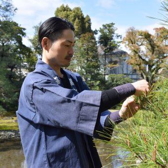 無鄰菴 庭師と学ぶフォスタリング・スタディーズ第4シリーズ (全6回) 第5回:マツの葉むしり