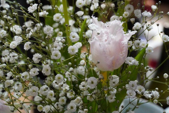 ▲めぐみさんが誕生日に友人からもらったというチューリップとカスミ草。日ごろは和テイストの花が飾られていることが多く、少し新鮮な雰囲気ですが、これも華やかでいい感じ