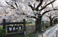 【哲学の道の桜 2021年3月27日】おすすめは早朝!
