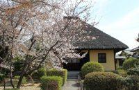 瑞光寺の茅葺の本堂に映える桜を愛でる【深草の桜2021年3月27日】