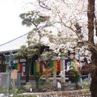 深草の桜の名所・墨染寺で「墨染桜」を愛でる【深草の桜2021年3月27日】