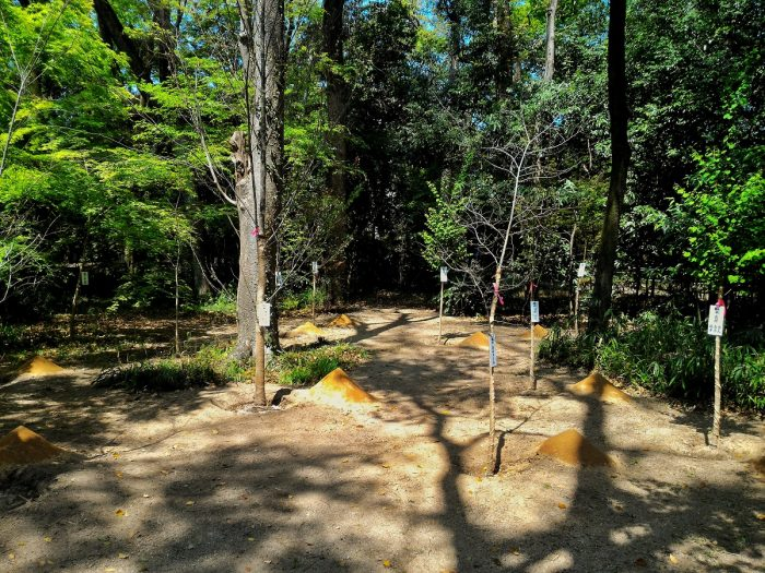 第31回記念 糺の森市民植樹祭