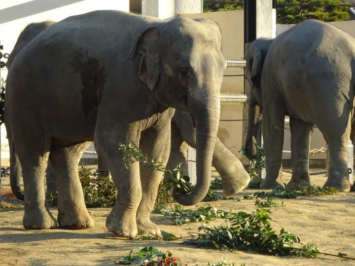 【要申込】さすてな講座 「京都市動物園のはてな?」<br>~動物園とSDGs~
