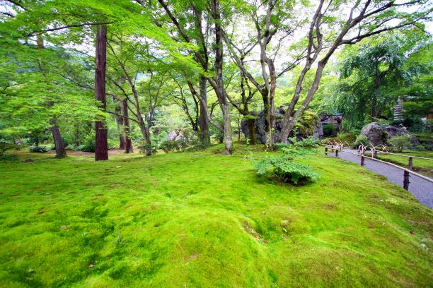 宝厳院 新緑の特別拝観