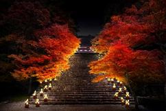 JR東海「ひかりの京都」
